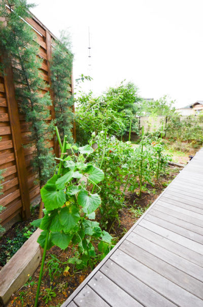 お庭では家庭菜園も